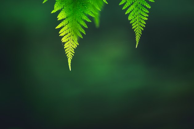 Low Angle View Of Fern Leaves