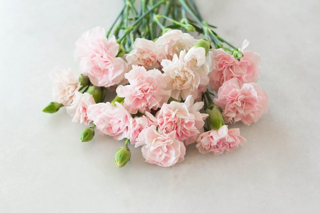 Pink Carnation Gilly Flower Bouquet