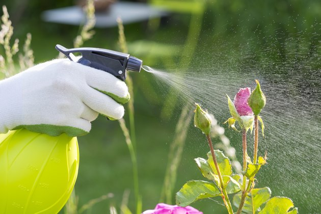 Woman spraying flowers in the garden