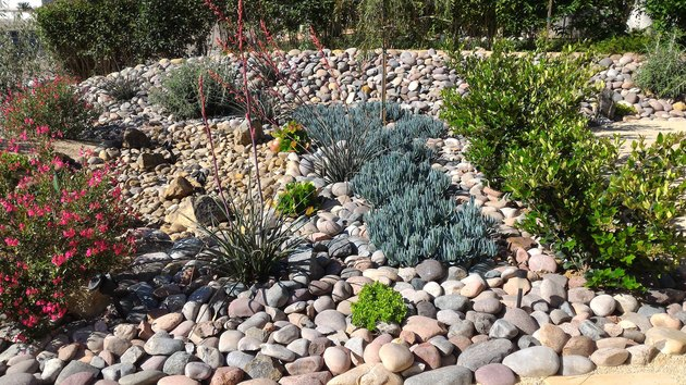 Xeriscaped Front Yard with Dry Creek Bed and Solar Lighting