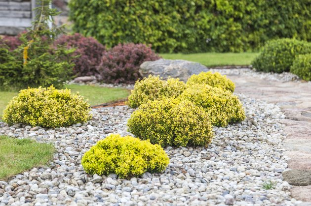 Bushes in the form of balls