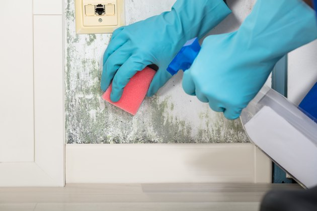 Person Hand Cleaning Moldy Wall