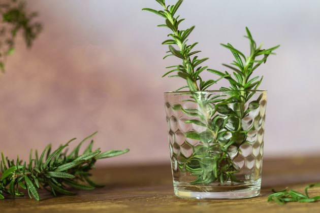 Rosemary - Fresh herb for tea, drink or the preparation of delicious food.