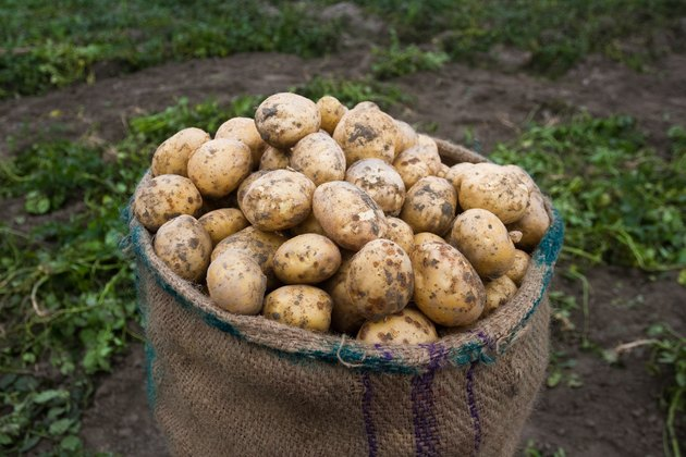 Close-Up Of Raw Potatoes In Sack At Farm