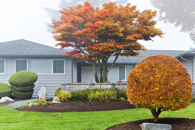 Autumn leaves on trees in front of house