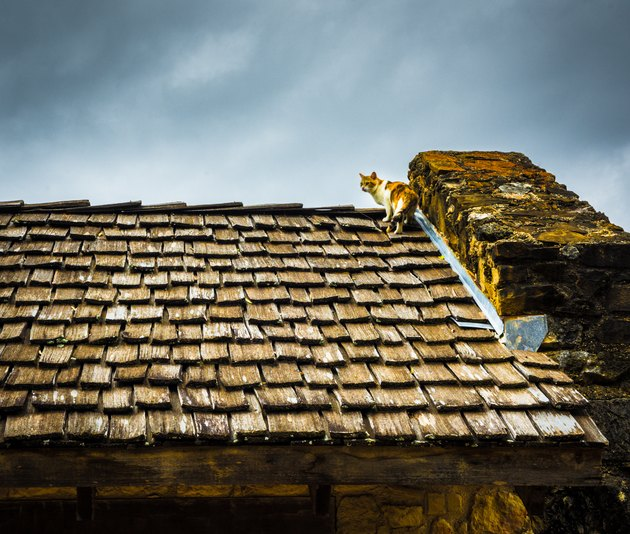 Cat on wood roof.