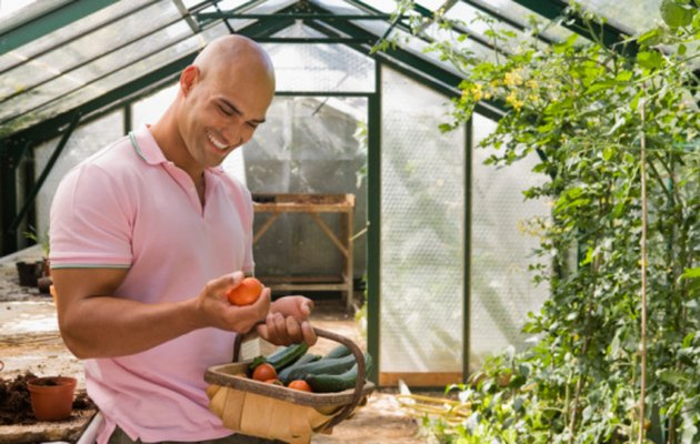 Can Cucumbers & Tomatoes Be Grown Together?