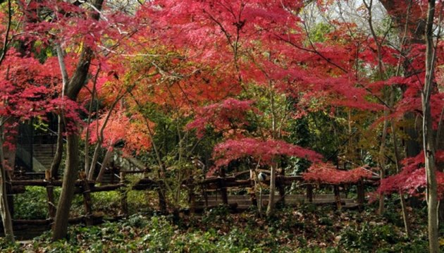 How to Root a Cutting From a Japanese Maple