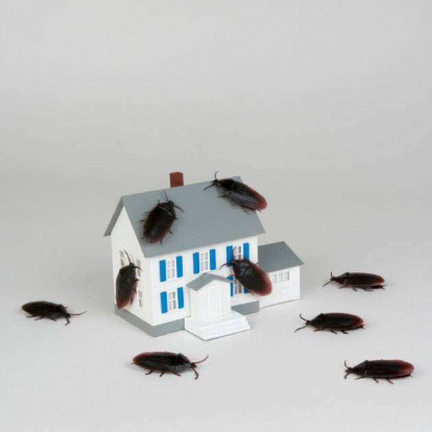 What Causes Bugs to Die In-Home?