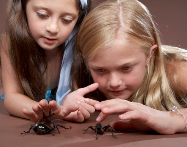 The Best Ways to Get Rid of Common House Spiders That Are Safe for Pets