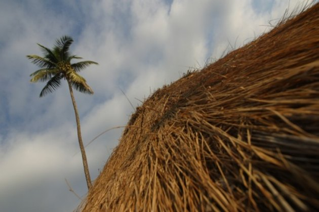 Thatched roof and palm tree.