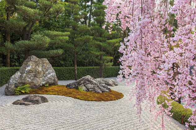 Japanese garden and cherry blossom