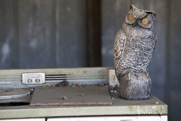 Antique Oven and Owl