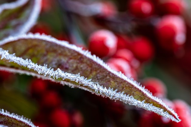 Frost on leaf.