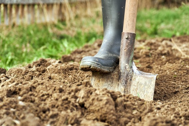 Digging a garden bed with a spade