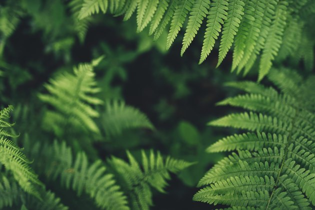 Fern Leaves In The Forest