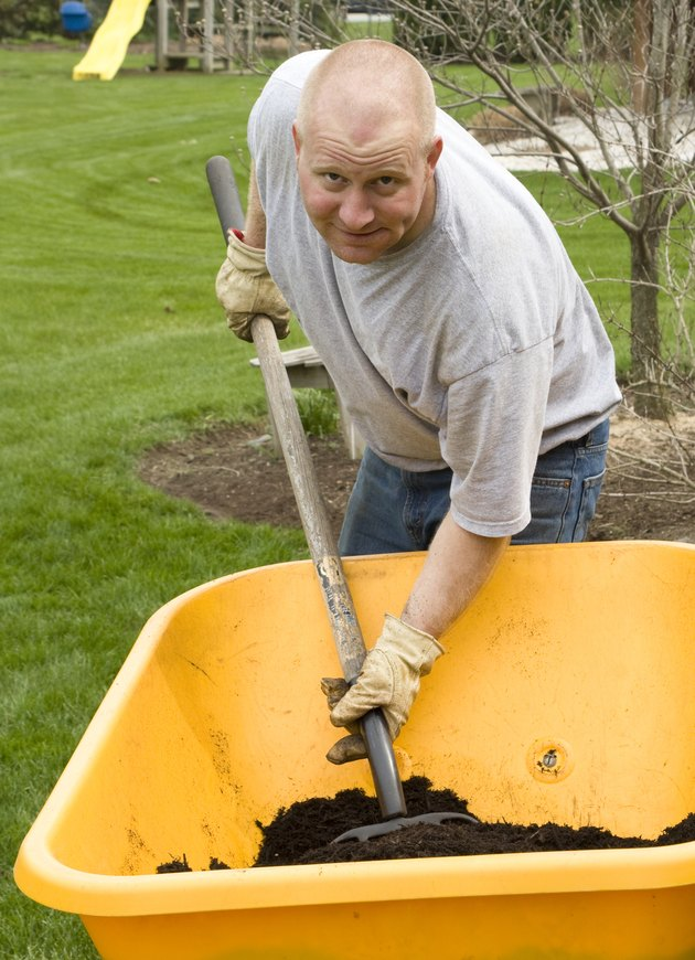 Man Mulches from a Wheelbarrow