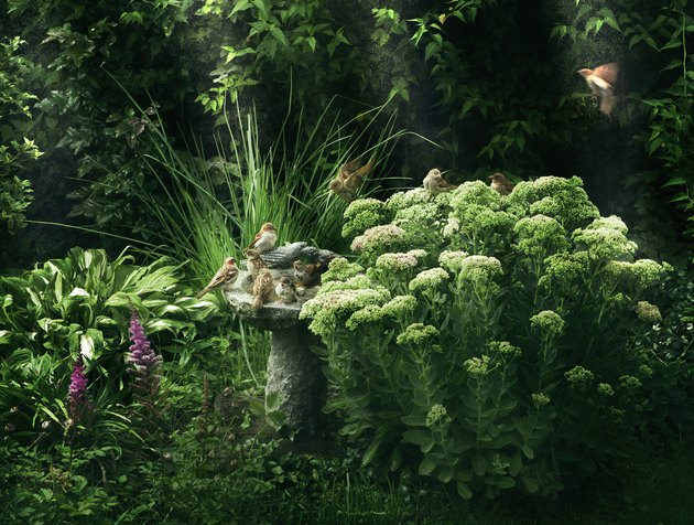 Green garden with rich growth and a bird bath.