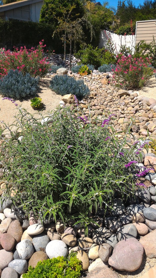 Xeriscaped Front Yard with Dry Creek Bed