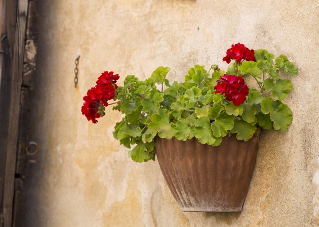 closeup of red flower pot attached to the wall