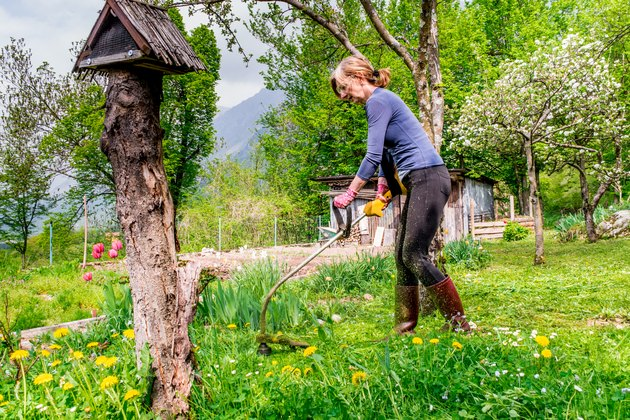 Woman Mowing The Lawn  On Back Yard Of The House