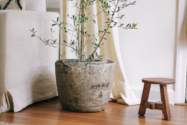 Hypertufa pot with olive tree next to wood stool in living room