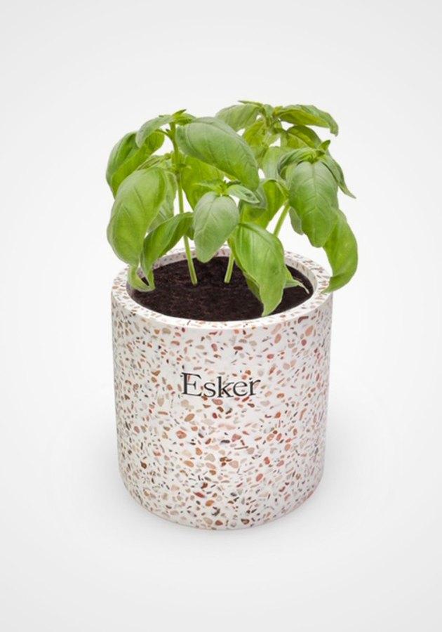 Esker Plantable Candle
