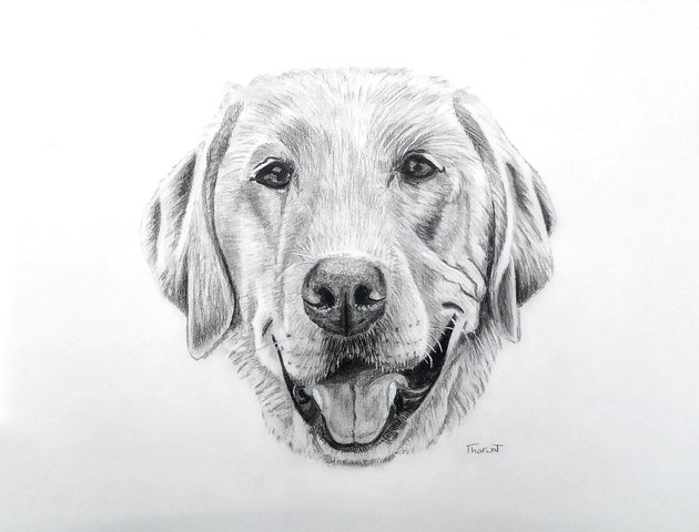Hand-drawn portrait of dog