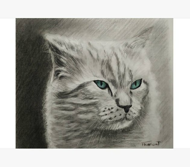 Hand-drawn portrait of a cat