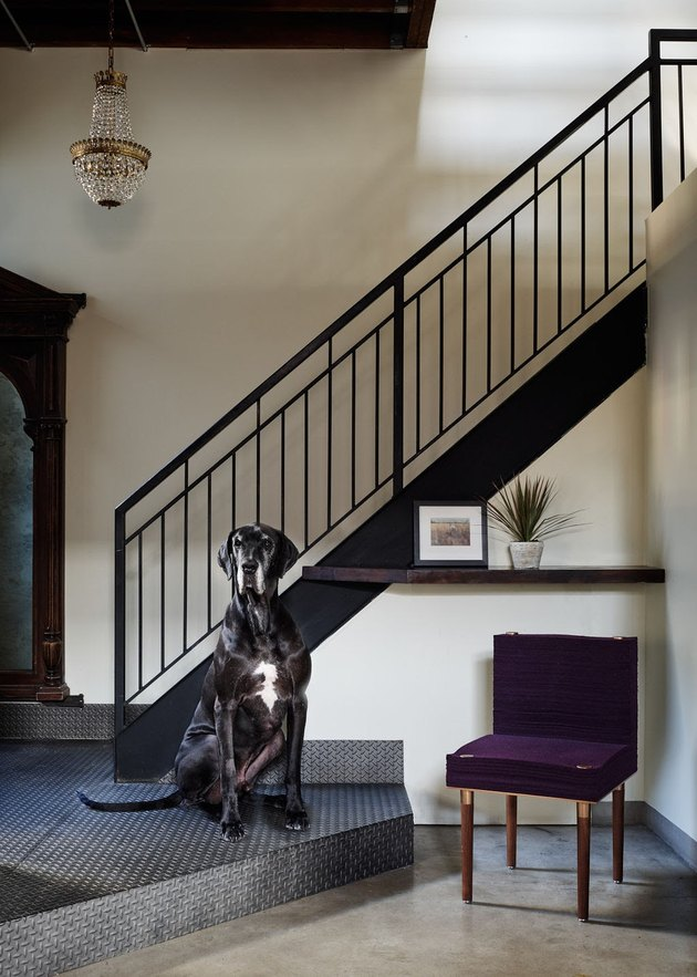 purple stacklab felt armchair next to large black dog and staircase