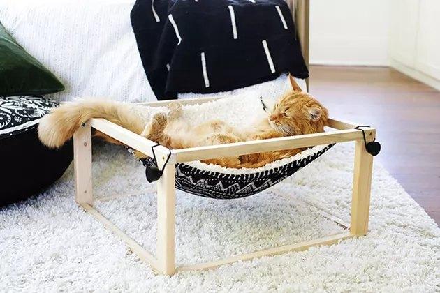 cat in black and white hammock