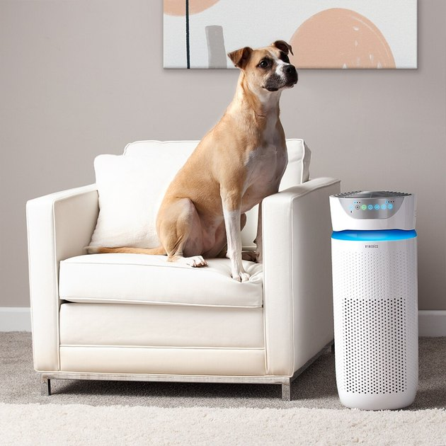 homedics dog on chair with air purifier