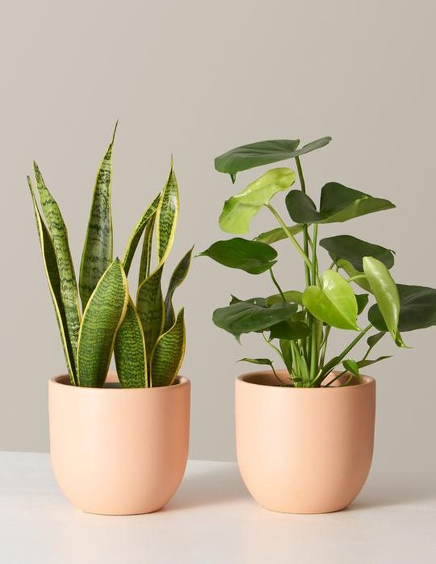 the sill plants