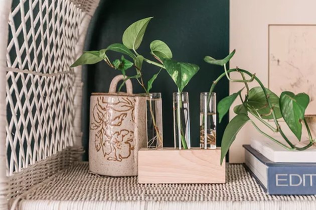 Propagate plants with this handy wood and glass holder.