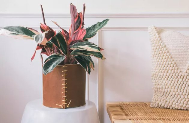 Leather plant holder and plant