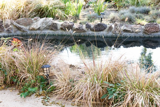 A swimming pool in a natural setting, surrounded by plants and rocks