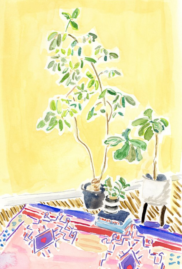 illustration of rug and plants against a bright yellow wall