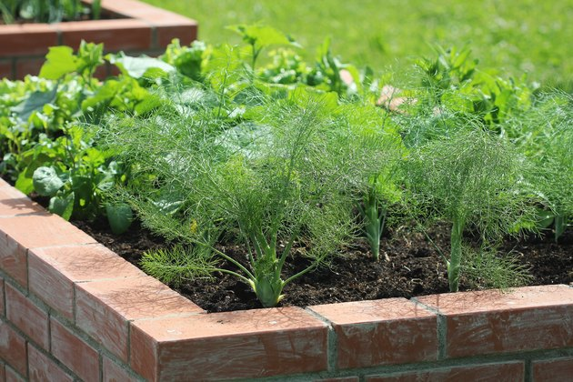 Raised beds gardening in an urban garden growing plants herbs spices berries and vegetables