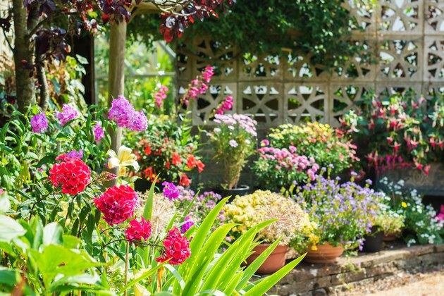 Beautiful backyard floral garden
