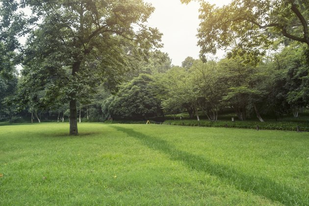Lawn and trees in the park