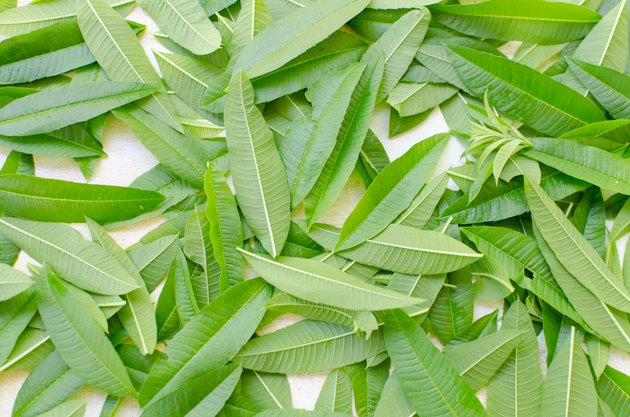 Aloysia citrodora - Lemon Verbena Leaves