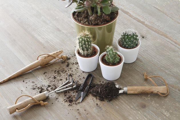 Gardening Tools And Cactus On Table