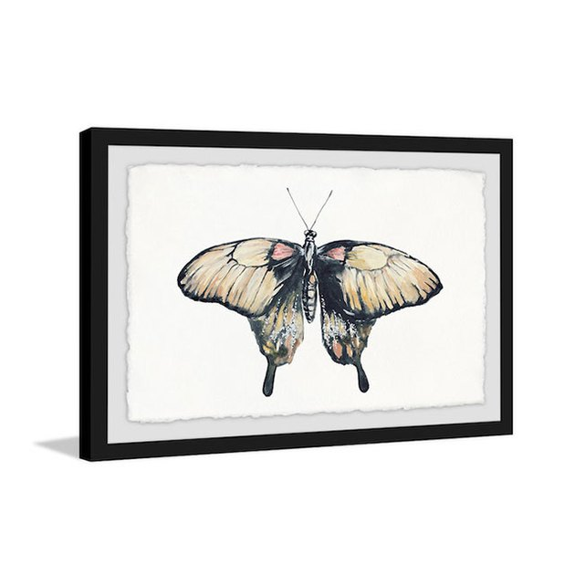 Cream Colored Wings Framed Painting Print