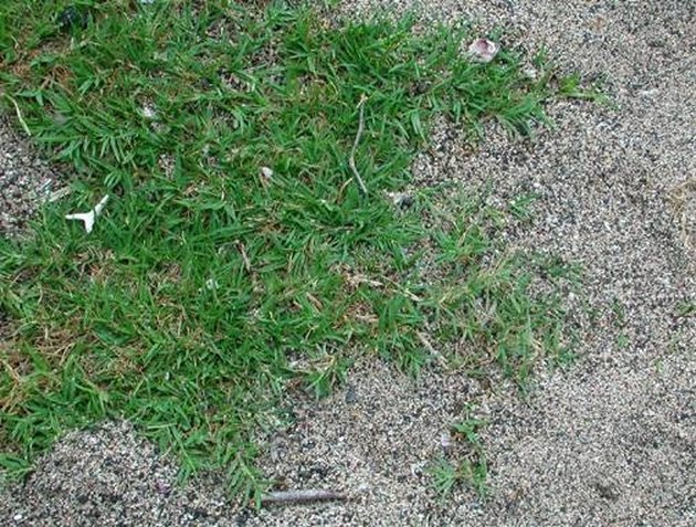 How to Plant Bermuda Grass Seed