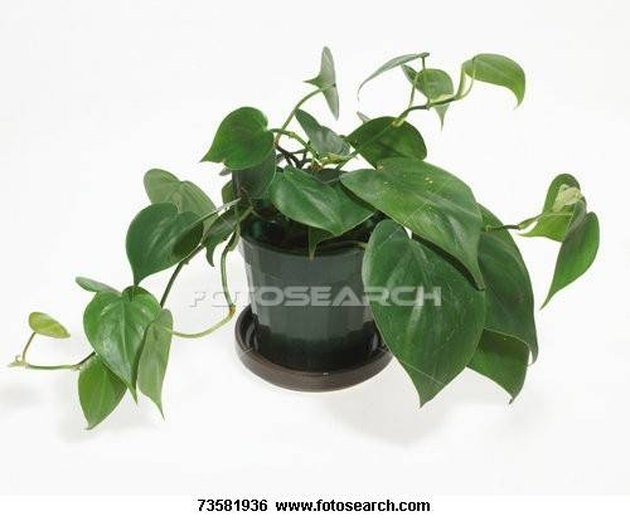 How to Identify Types of House Plants