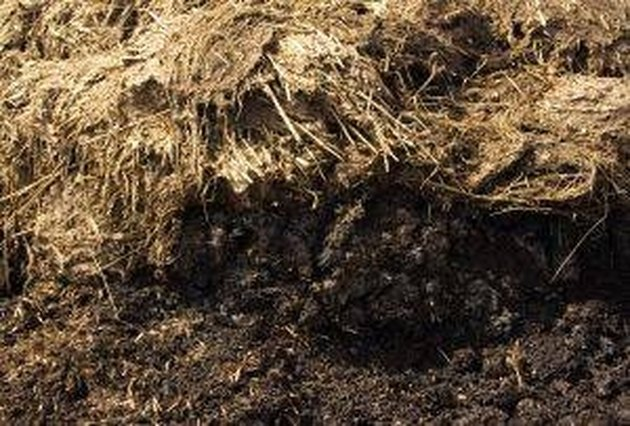 How to Make Compost Activators
