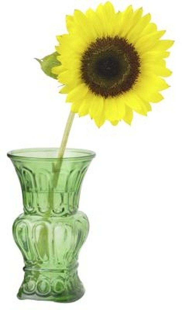 How to Keep Sunflowers Alive