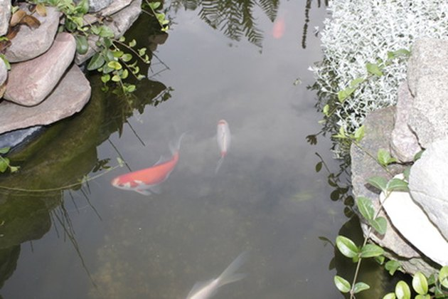 The minimum depth of ponds for fish in the winter hunker for Koi pond temperature