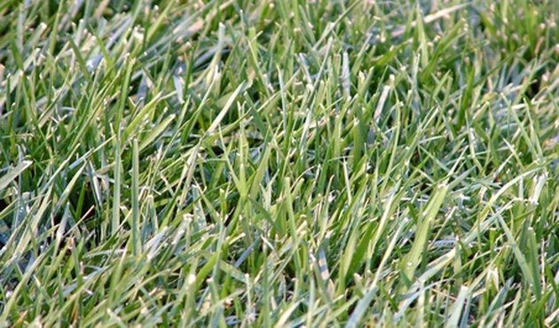 Texas Grass Types