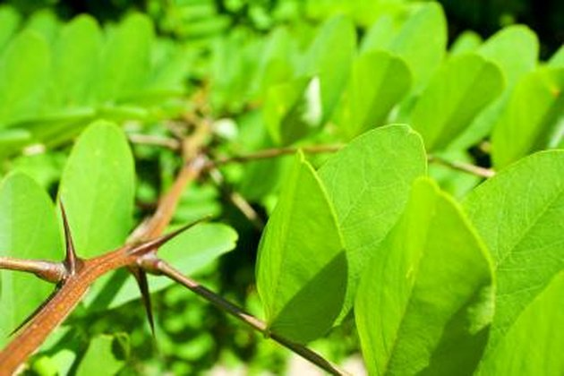 List Of Flowering Plants With Thorns Hunker